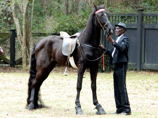marsh-tacky3-old-hat-man-old-horse