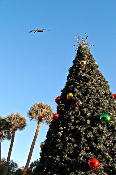 xmas harbour town tree
