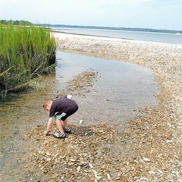 hilton head faq blog picking sea shells 375x375