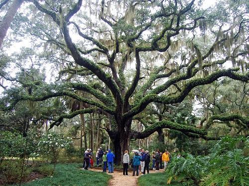 washington oaks gardens fro