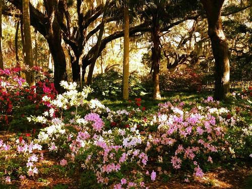 washinton oaks gardens