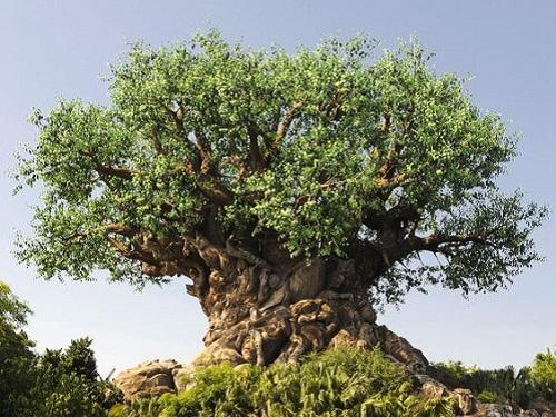 25 header part 1 tips tricks disney blog tree of life