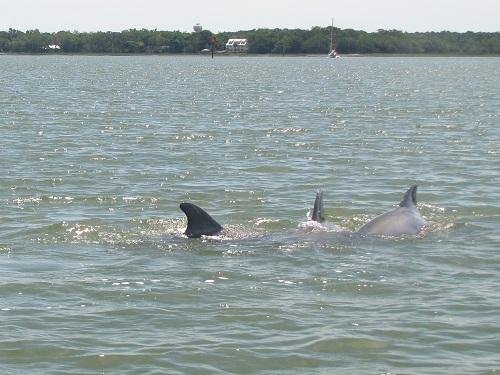 grand island tour dolphins