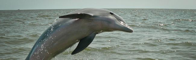 Dolphins – Cute and Intelligent