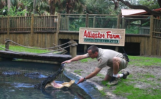 Experience the St. Augustine Alligator Farm Zoological Park