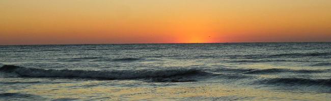 Enjoy Florida Nature's Artistry on the Beach